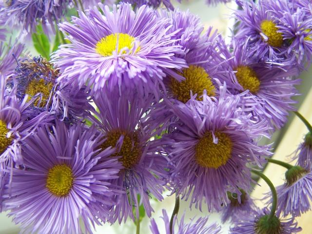 pretty, bright purple flowers :)
