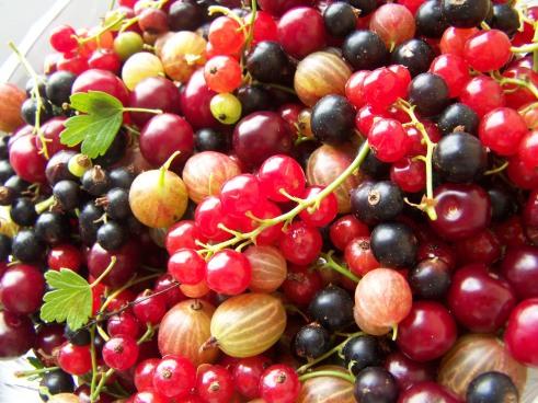 лесные ягоды - forest berries!